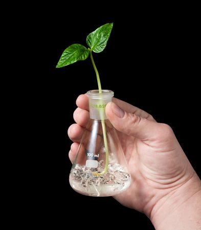 immature: The hand holds a flask with sprout. Isolated on black. Stock Photo
