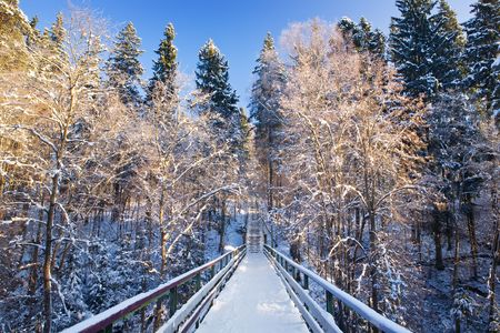 shined: Snow covered footbridge on clear winter day. Trees shined by the sun and blue sky.