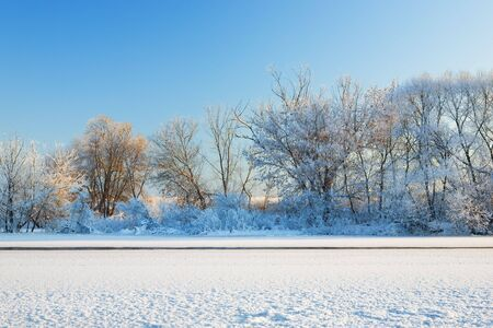 hoar: Trees on coast of the river are covered by hoarfrost and shined with the sun