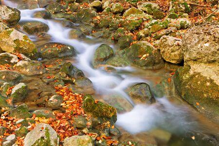 proceeds: El arroyo contin�a sobre las piedras cubiertas por amarillo y naranja oto�o hojas