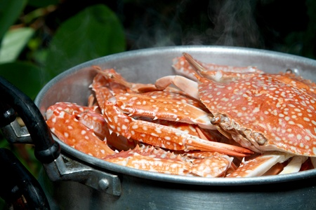 crab pot: steamed flower crab in steaming pot Stock Photo