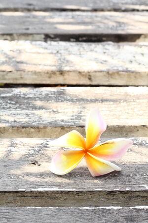 white frangipani flowers on old wood photo