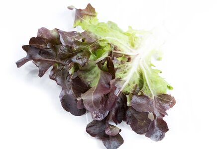 fresh red lettuce on white background photo