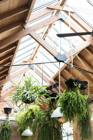 hanged: decorative hanged tree pots
