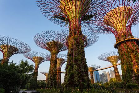 grooves: SINGAPORE - FEBRUARY 28, 2015: Supertree Grooves over the blue sky in the morning. Supertree Grooves are the 16 storeys high towers located in Garden by the bay, Singapore.