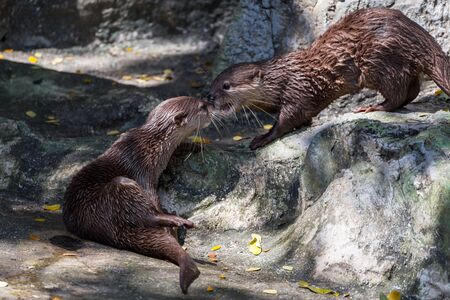 otter: otter in a zoo Stock Photo
