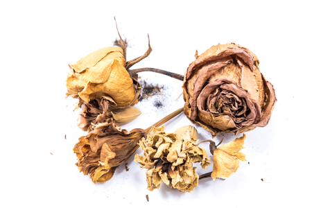brown dried flower isolated on white background