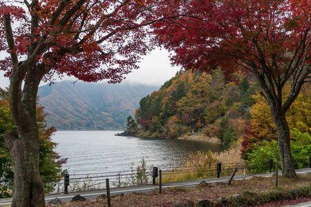 autumn leaves at Kawaguchi lake, Japan