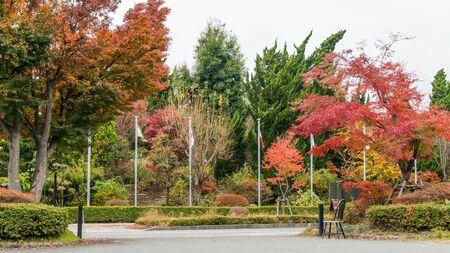autumn leaves along the road at Kawaguchi lake, Japan