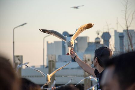 Every year during the month of November to March.Seagulls are a lot of migration to the city SamutPrakarn(Thailand).It is only four to five months.After that, it will return to their habitat in China.