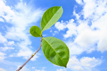 green leaf with on blue sky background photo