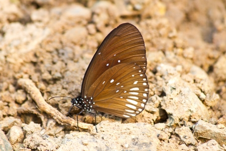 absorption: Butterflies are absorption minerals on the ground in forest