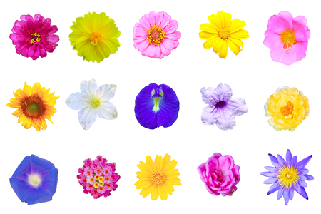 set flowers isolated on white background from Thailand photo