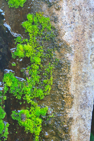 Old wall with moss and various stains, close up