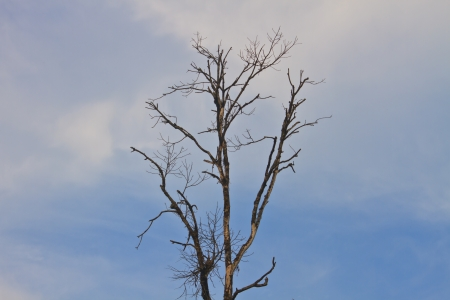 Branch of dead tree on sky background
