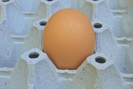 Chicken egg on egg tray Stock Photo