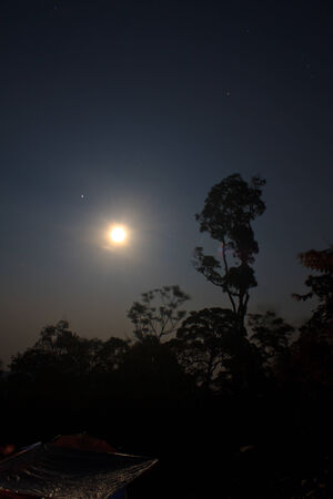 scarry: full moon at night in forest