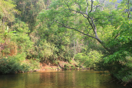 River in deep forest, river in evergreen forest in Thailand  photo