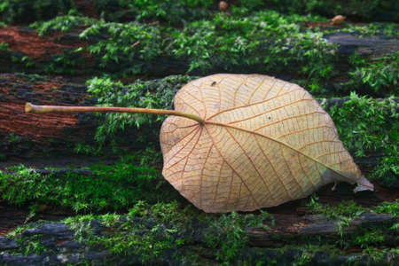 Close up of autumn leaf on log in forest photo