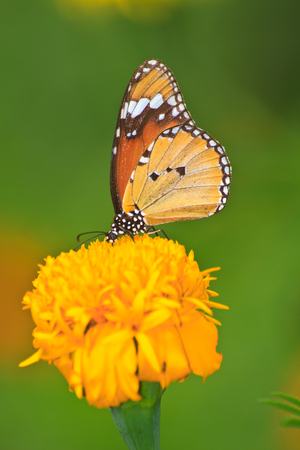 Beautiful butterfly on flower in summer garden photo