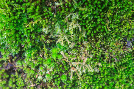 The texture of tree bark with moss photo