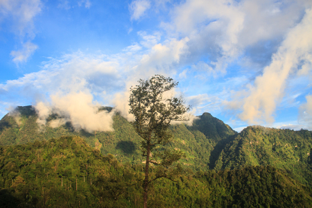 top veiw: beautiful green mountains and forest on top veiw