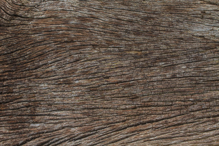 texture of bark wood use as natural background photo