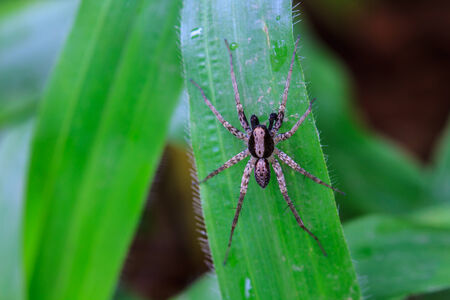eight legs: spider in forest, abstract in nature background