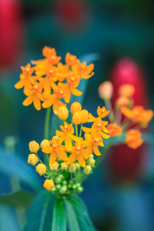 summer background with beautiful yellow flowers in garden photo