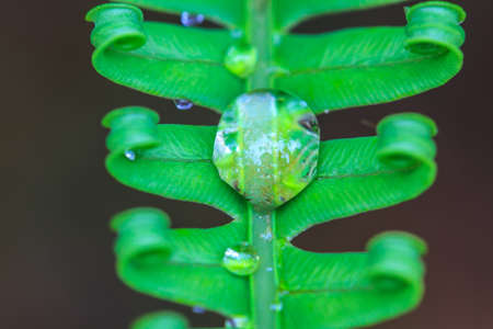 Freshness of water drops on green fern leaves photo