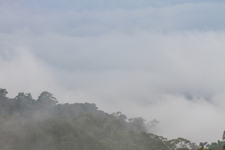 fog and cloud mountain valley landscape, plant fog and mountain background photo