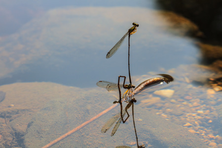 damselfly resting on branch over river in forest photo