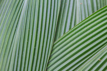 Abstract image of Green Palm leaves in nature photo