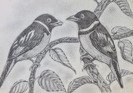 The original drawing of birds on white paper photo