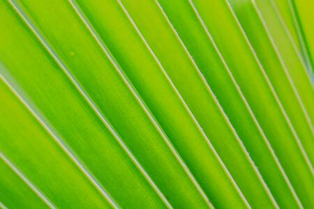 Green coconut leaf pattern, coconut leaf texture photo