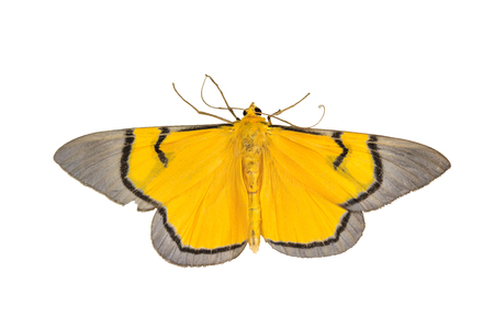 Close up of moth,night butterfly,Beautiful Insect on white background Stock fotó
