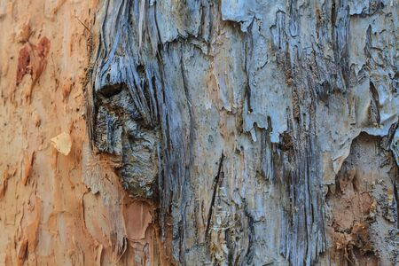 Tree bark texture,texture of bark wood use as natural background photo