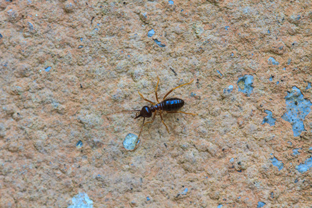 nuisance: close up Termites eating the house on wall Stock Photo
