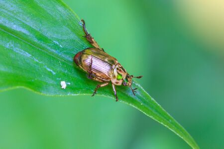 Insect on leaf, beautiful wildlife in nature photo