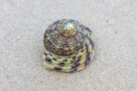 crustacea: Hermit Crab in a screw shell on tropical sea Stock Photo