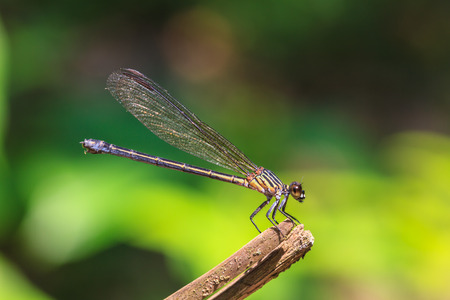 beautiful dragonfly resting on a branch in forest