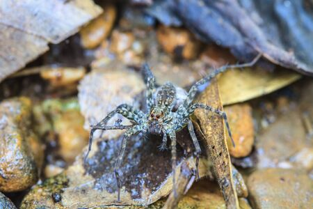 bruennichi: spider in forest, abstract in nature background