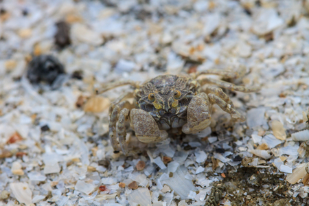 close up crab on a background of sand
