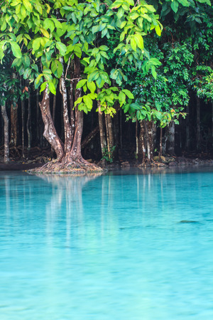 Emerald Pool (Sra Morakot) Krabi province , Thailand, hot lagoon photo