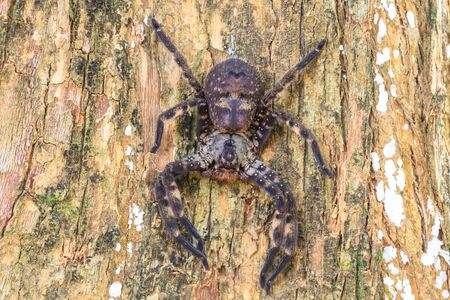 golden orb weaver: spider in forest, abstract in nature background