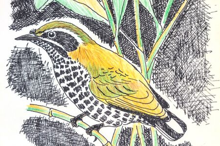 speckled: The original drawing of birds on white paper,Speckled Piculet
