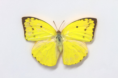 specimens: Butterfly Collection, Butterfly specimens in the laboratory