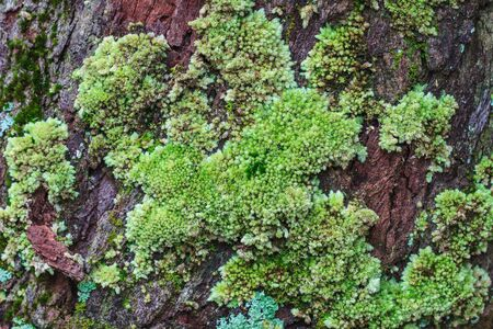 brake fern: tree trunk with moss, can be used as background