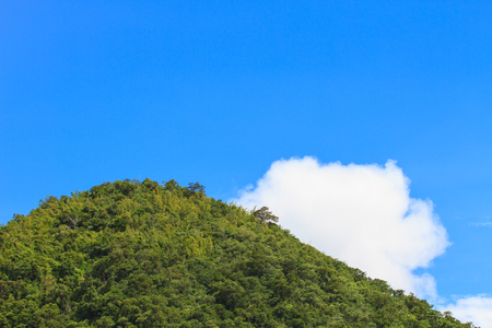 uplifting: green forest and blue sky with white cloud background
