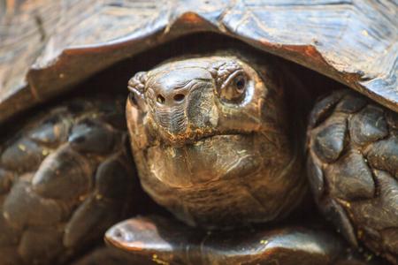 tortuga: Negro cerca de la tortuga gigante en el bosque Foto de archivo